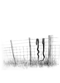 Snakes on the fence